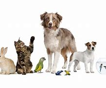 Read more about the article Blessing of the Animals